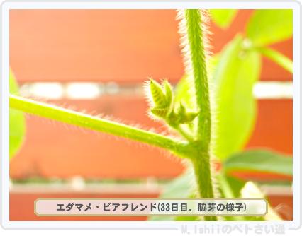 ペトさい(エダマメR)37