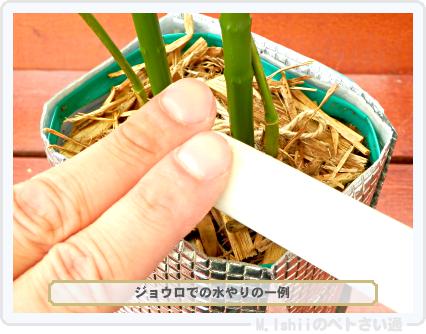 ペトさい(エダマメR)42