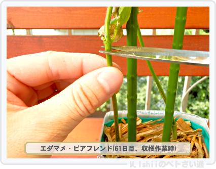 ペトさい(エダマメR)50