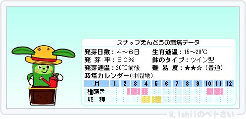 ペトさい(スナップえんどう)12