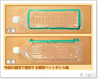 ペット栽培・試験録(30日絹さや)03