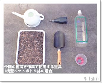 ペット栽培・試験録(30日絹さや)04