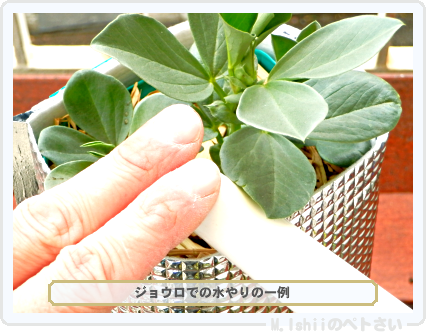 ペトさい(ソラマメ・改)39