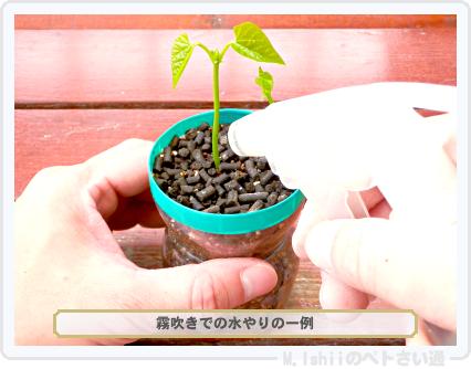 ペトさい(シカクマメ・改)14