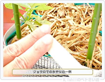 ペトさい(シカクマメ・改)39