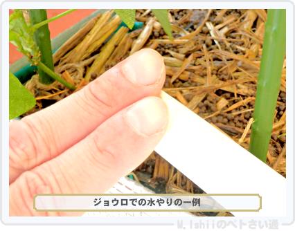 ペトさい(シカクマメ・改)52