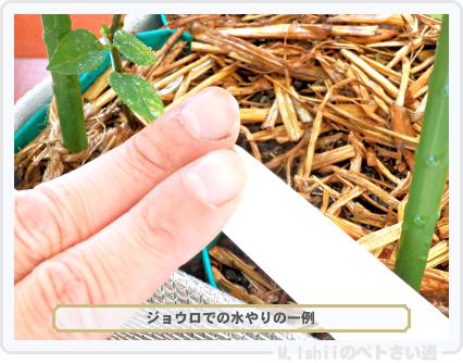 ペトさい(シカクマメ・改)59