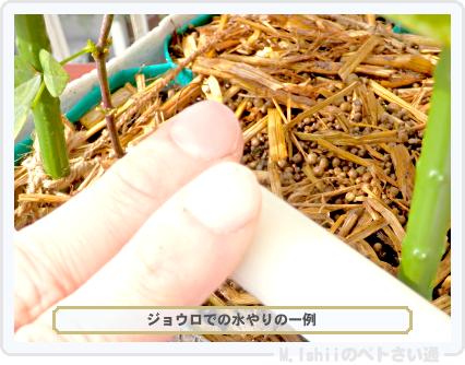 ペトさい(シカクマメ・改)64