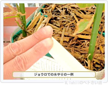 ペトさい(シカクマメ・改)68