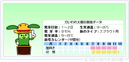 ペトさい(かいわれ大根)14