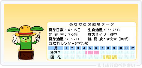 ペトさい(あさがお)16