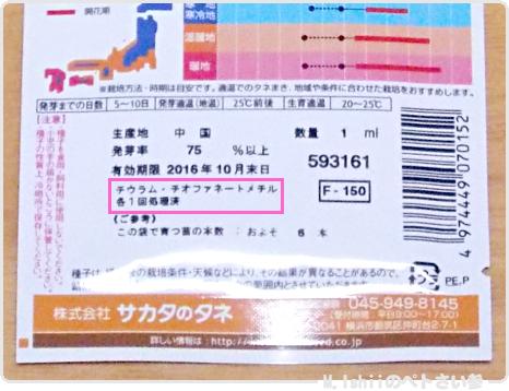 ペトさい(あさがお)02