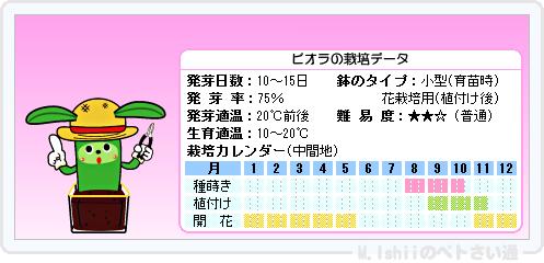 ペトさい(ビオラ)14