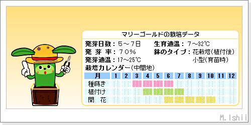 花のペット栽培II(マリーゴールド・改)03