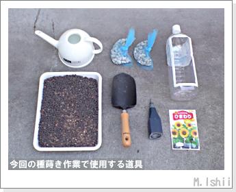花のペット栽培(ミニひまわり)03