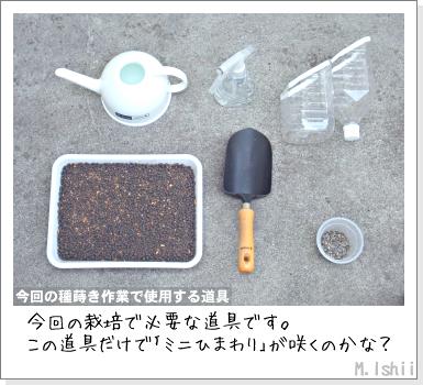 花のペット栽培II(ミニひまわり)02