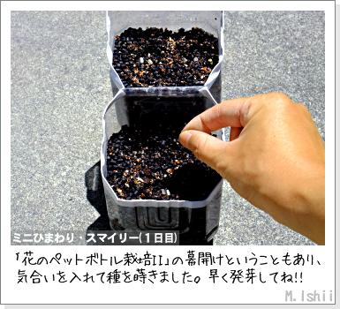 花のペット栽培II(ミニひまわり)04