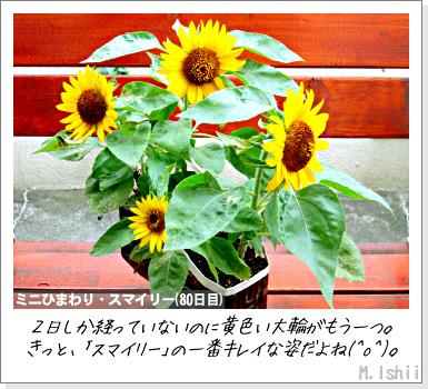 花のペット栽培II(ミニひまわり)22