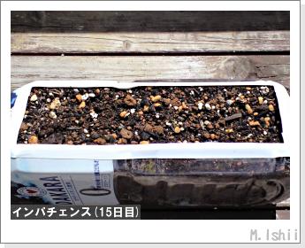 花のペット栽培(インパチェンス)04