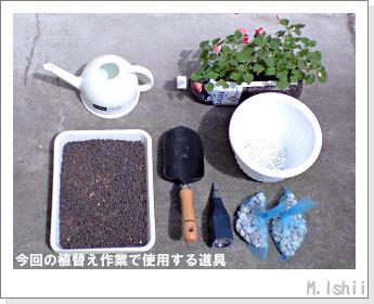 花のペット栽培(インパチェンス)25