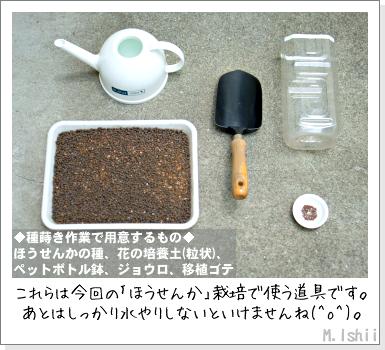花のペット栽培II(ほうせんか)03