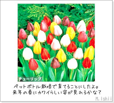 花のペット栽培II(チューリップ)01
