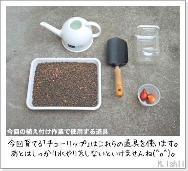 花のペット栽培II(チューリップ)02