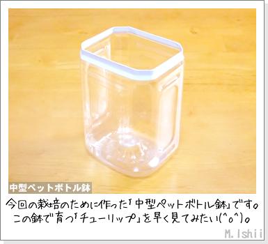 花のペット栽培II(チューリップ)04