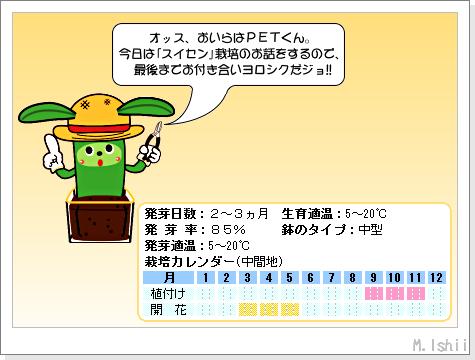 花のペット栽培II(スイセン)01