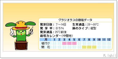 花のペット栽培II(グラジオラス)02