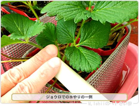 ペトさい(採種イチゴ・改)119