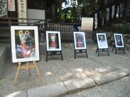 12 各地の神社から写真の狐さんの登場