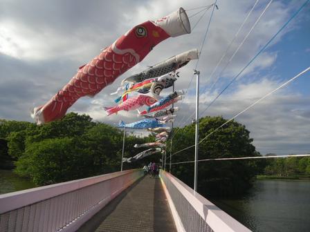 2 一文字橋の上で泳ぐ鯉のぼりたち