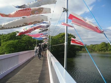 8 一文字橋の上でひるがえる鯉たち