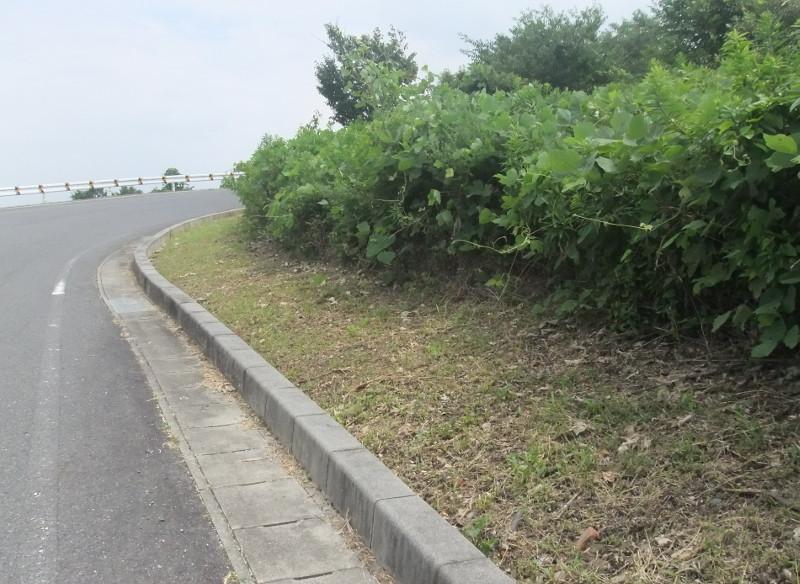 市道の清掃草刈り3