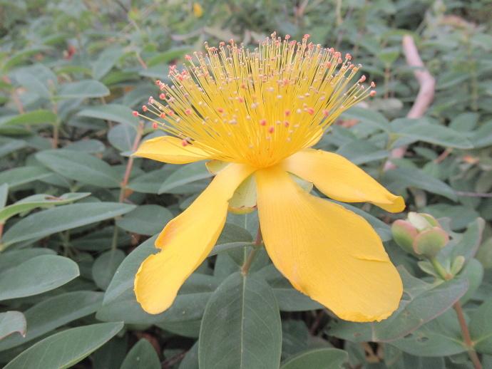170601黄色 (3)