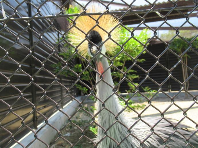 170615動物園 (3)