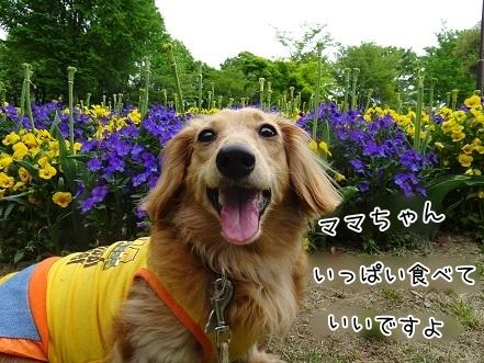 kinako7464.jpg