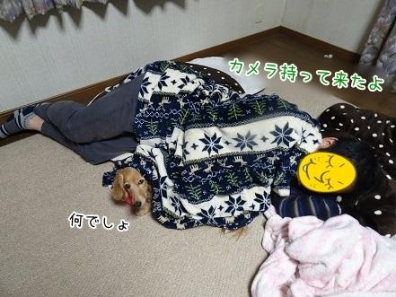 kinako7471.jpg