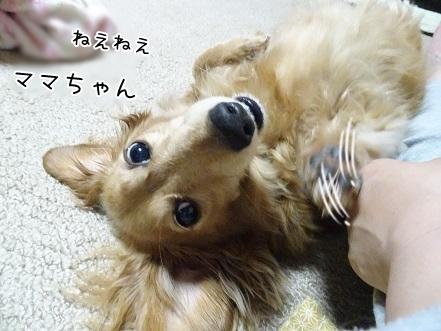 kinako7476.jpg