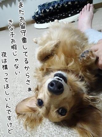 kinako7477.jpg