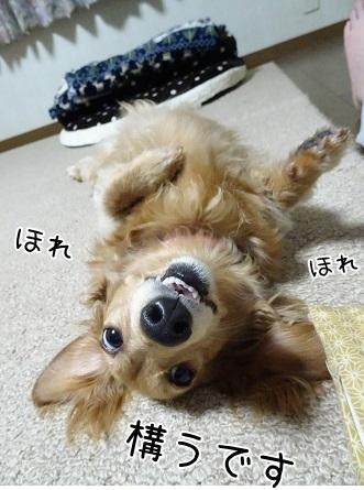 kinako7478.jpg