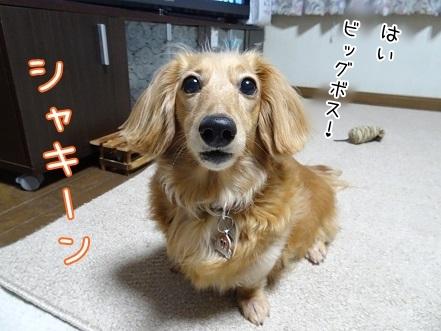 kinako7484.jpg