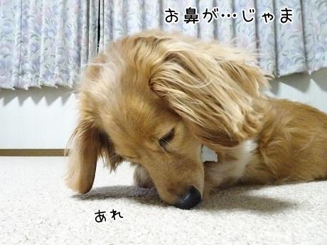 kinako7493.jpg