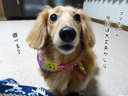 kinako7496.jpg