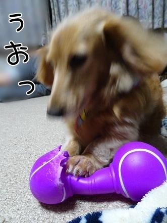 kinako7500.jpg