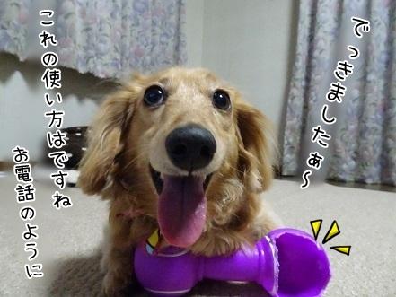 kinako7507.jpg