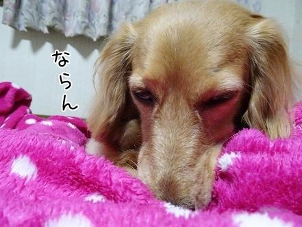 kinako7513.jpg
