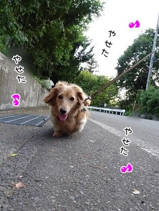 kinako7525.jpg