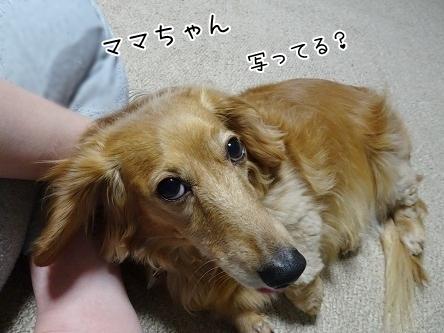 kinako7527.jpg